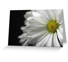White Daisy Closeup Greeting Card