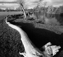 Dedham Deadwood by Christopher Cullen