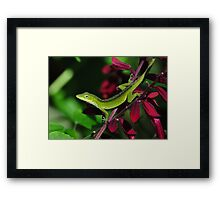 Early Morning Anole Framed Print