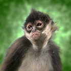mexican spider monkey by gruntpig
