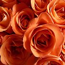 Roses - Fair Trade Certified by bubblehex08