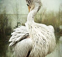 Preening Pelican by Lissywitch