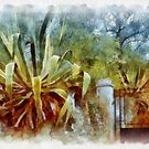 Agave - Loano by Gilberte