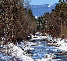 germany, winter brook by Daidalos