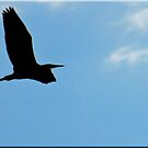 silhouette of a heron by Bine