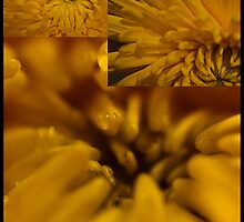 Three flowers - yellow Dahlia by KSKphotography
