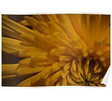 Yellow Dahlia 2  Poster