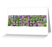 Mauve & White Wild Flowers of Argyll Greeting Card
