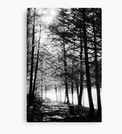 Sunlight through Grainy Trees Canvas Print