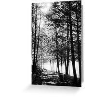 Sunlight through Grainy Trees Greeting Card