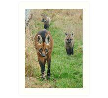 Maned wolf family Art Print