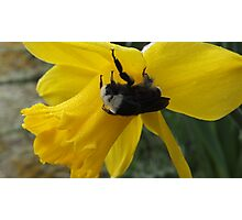 Cold Bumble Bee Photographic Print