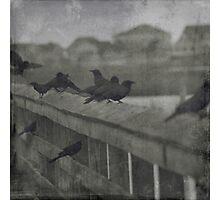 Raven Haven Photographic Print