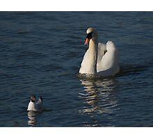 Swan & Gull Photographic Print