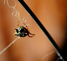 Jewel Spider by Candice O'Neill