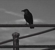 Crow on Metal Railings by Andy Merrett