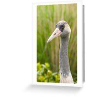 Eurasian Crane Greeting Card