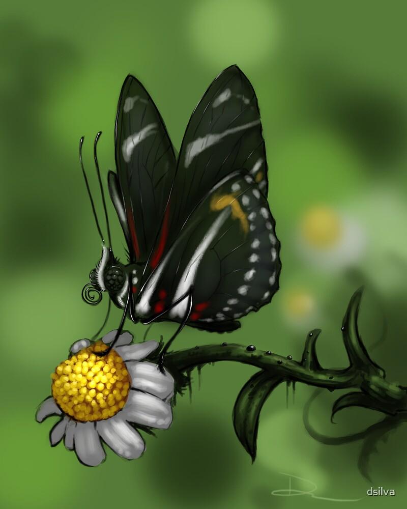 Zebra Heliconian by dsilva