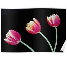 Tres Tulips Poster