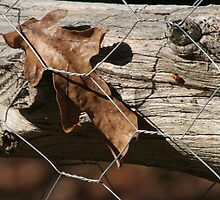 Fenced in leaf by Rebecca Lee Means