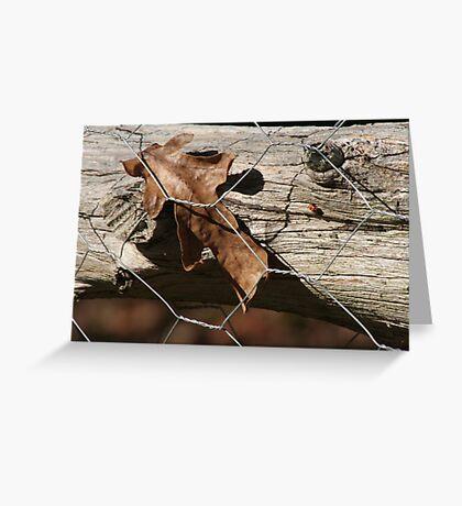 Fenced in leaf Greeting Card