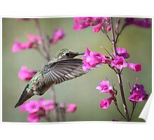 Hummingbird and Spring Flowers Poster