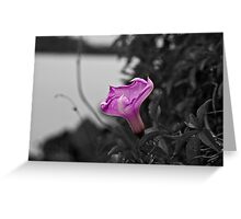 Popping Purple Flower Greeting Card