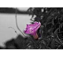Popping Purple Flower Photographic Print