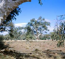 Todd River, Alice Springs, Australia (1966) by Margaret  Hyde