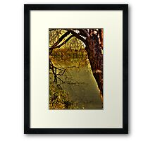 Withered old tree Framed Print