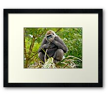 GORILLA SITTING ON TOP OF A TREE Framed Print