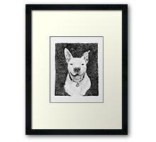 Stanley the Pit bull Framed Print