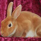 The Velveteen Rabbit by Kassey Ankers