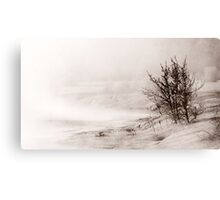 7.3.2012: From the Bank of Cold River III Canvas Print