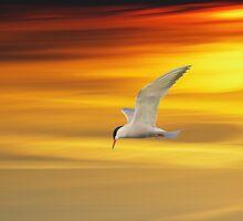 Fliegende Seeschwalbe by Aviana