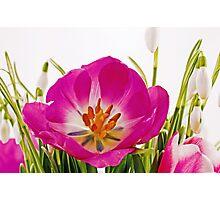 Frühjahrsfarben Photographic Print