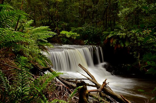 Barrengarry Creek. by Julie  White