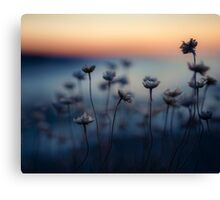 The Summers Twilight on Trevone's Thrift Canvas Print
