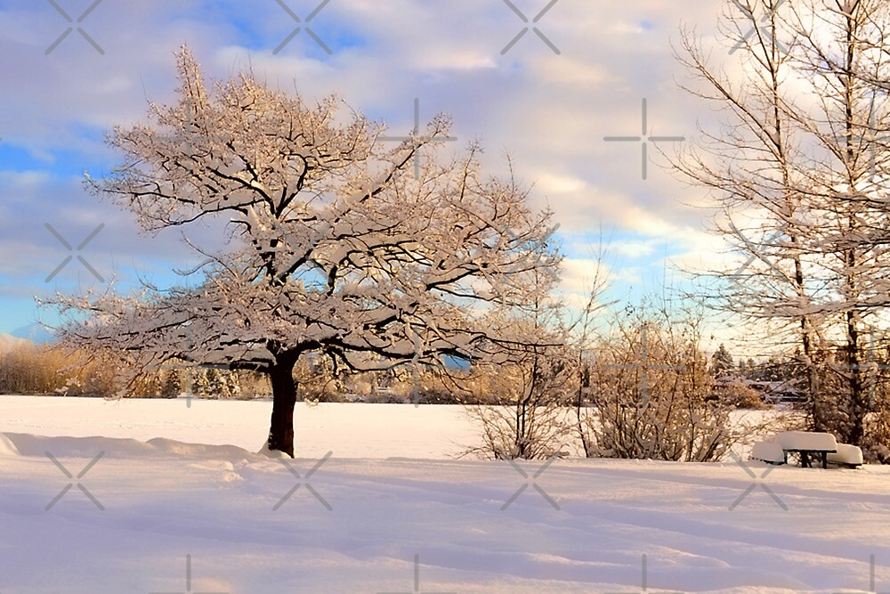Winter At Mill Lake by Randy Giesbrecht