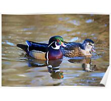 Wood Ducks 2 Poster