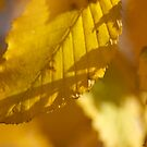 Yellow Leaf Abstract by Andy Merrett