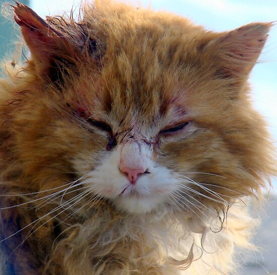 LIFE OF A FERAL CAT...Beaten but not down! by PatChristensen