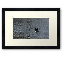 Gull Flying Over Water Framed Print