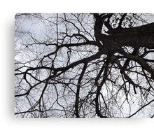 Branch Web Canvas Print