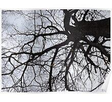 Branch Web Poster