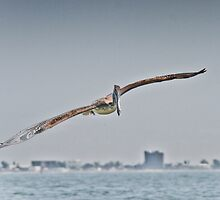Pelican flying over the Gulf by KSKphotography