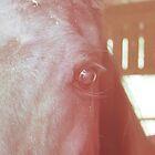 eye see you by Jamie McCall
