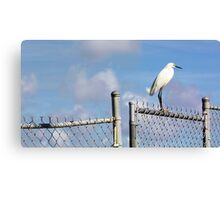 Snowy Egret - Chain Link Fence Canvas Print