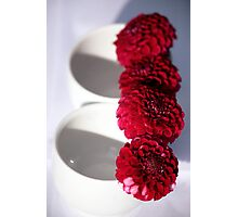 Linear Flowers Photographic Print