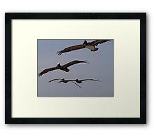 Pelican's Squadron - Flotilla De Pelicanos Framed Print